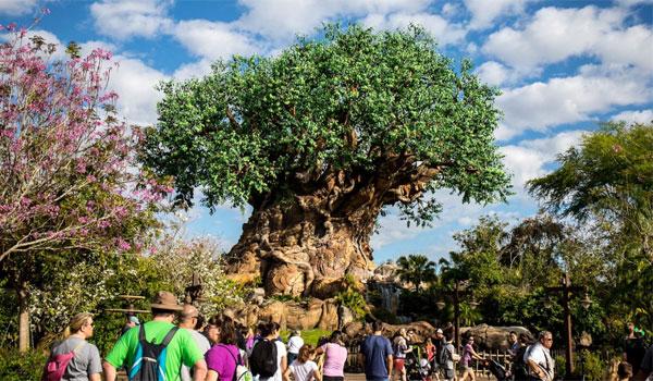 Animal Kingdom drzewo