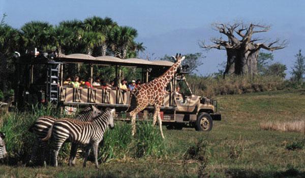 Kilimanjaro Safari Disney