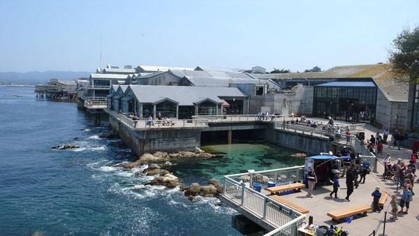 Monterey akwarium