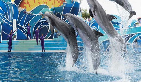 Delfiny w SeaWorld San Diego