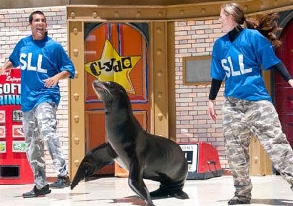 lwy morskie SeaWorld