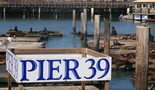 lwy morskie San Francisco