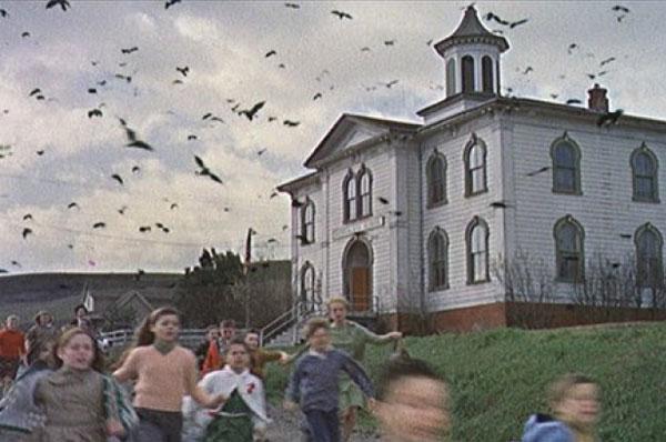 scena z filmu Ptaki