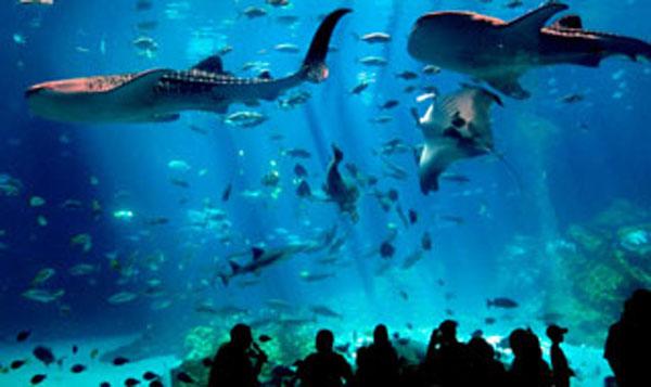 Ocean World akwarium