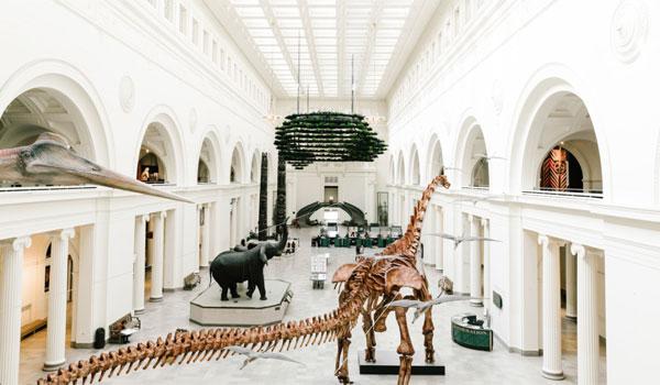 Muzeum Historii Naturalnej Chicago