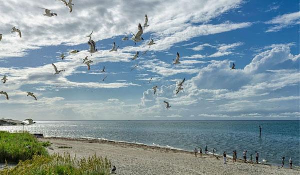 Plaża Ocracoke