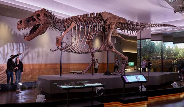 T Rex Fields Museum