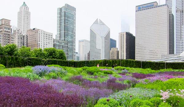 atrakcje na swiezym powietrzu w Chicago