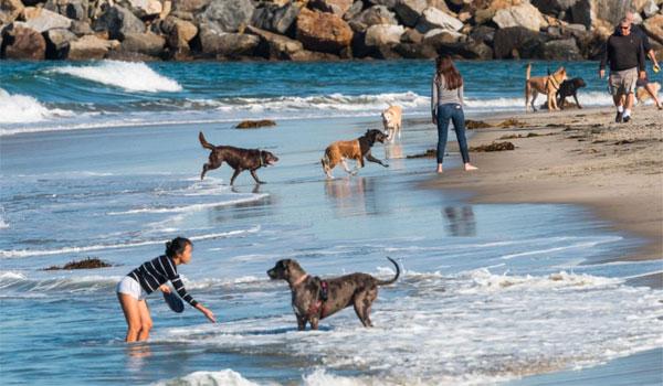 plaża dla psów Kalifornia