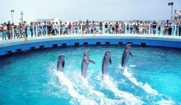 delfiny Destin
