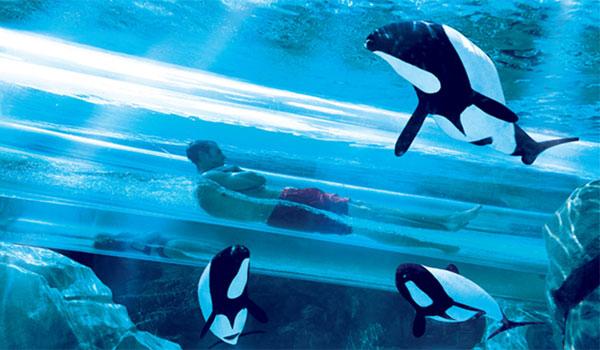 zjeżdżalnia Dolphin Plunge