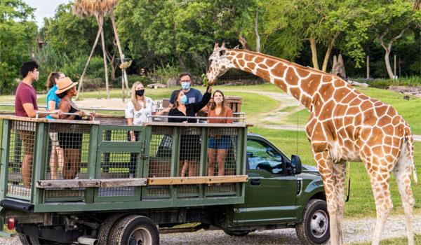 safari w Busch Gardens