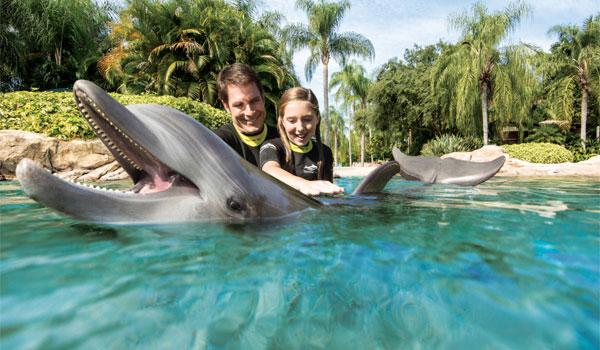 delfiny w Discovery Cove