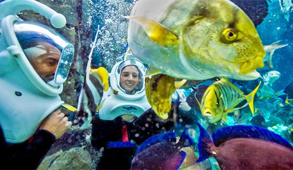 pływanie z rybami Grand Reef