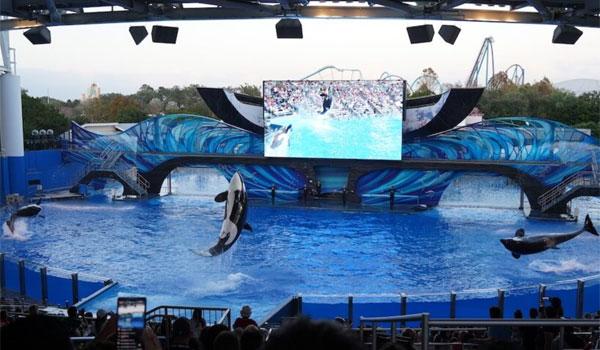 pokaz orek Sea World Orlando