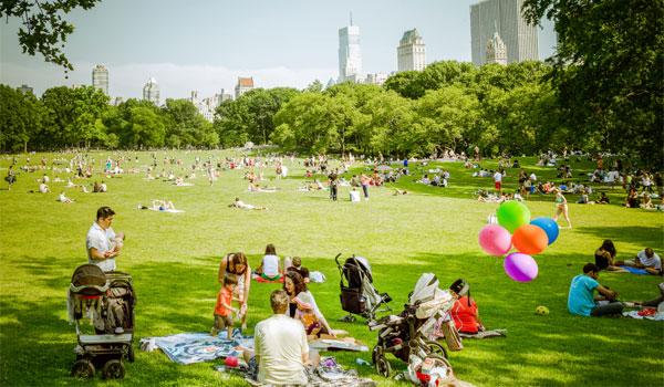 trawnik w Central Parku