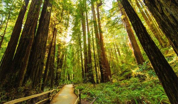 lasy sekwojowe Muir